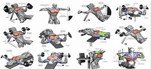 Best 5 Chest Exercises For Men