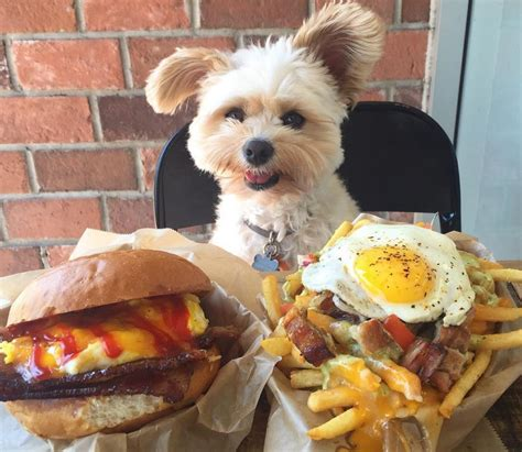 Popeye The Foodie Dog Has The Best Food Porn Filled