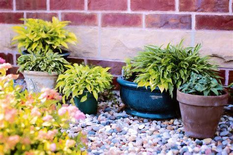 rempotage et poterie pour plantes d int 233 rieur ou d ext 233 rieur mobilier d 233 coration