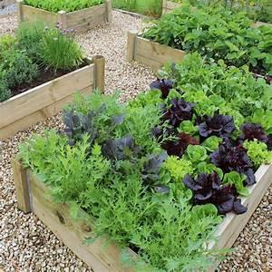 What To Grow In A School Vegetable Garden