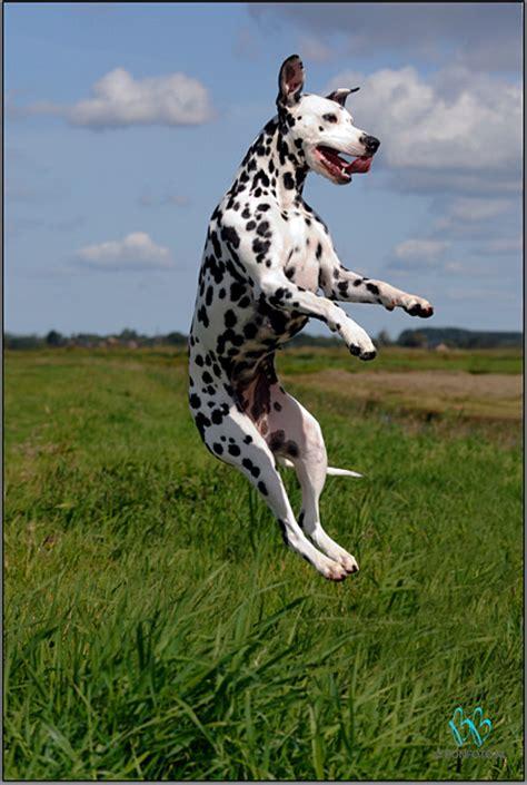 bonfoto hondenfotografie op locatie