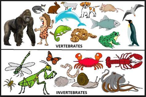 25 Contoh hewan Invertebrata dan vertebrata terlengkap ...