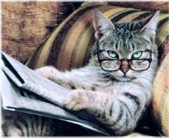 Newspaper Cat Meme - studious cat reading a newspaper wearing reading glasses plus other funny cat pictures including