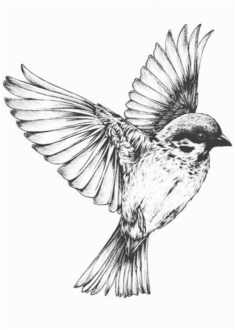 bird flying drawing | Tattoos | Pinterest | Creativity