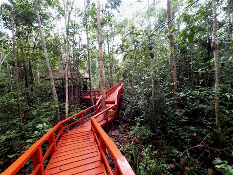 mongabay travel hutan pelawan surga  tengah bangka