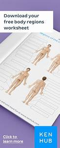 Body Regions  Learn With Quizzes And Labeled Diagrams