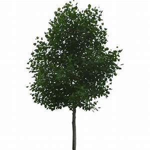 17 Free Trees For Photoshop Images - Cut Out Trees ...