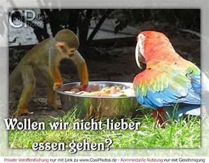 Essen Gehen Osnabrück : wollen wir nicht lieber essen gehen ~ Eleganceandgraceweddings.com Haus und Dekorationen