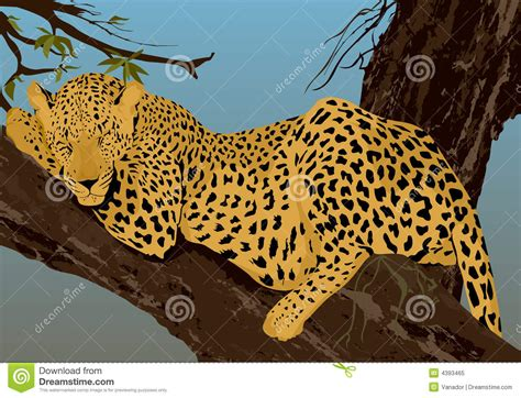 sleeping leopard stock illustration illustration
