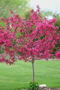 Zwergflieder Auf Stamm : die besten 25 dwarf flowering trees ideen auf pinterest ~ Lizthompson.info Haus und Dekorationen