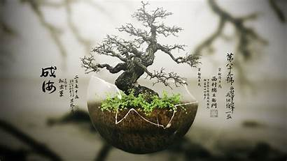 Bonsai Zen Tree Background Wallpapers