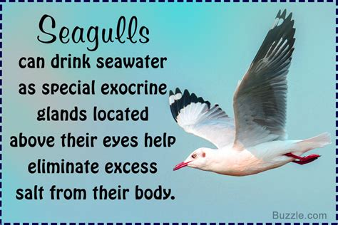 super interesting facts about seagulls you probably didn t