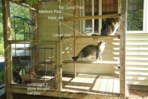 6 affordable diy cat furniture projects