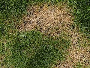 Braune Stellen Im Rasen : wenn es noch nicht allzu heiss ist temperaturen bis zu 25 ~ Lizthompson.info Haus und Dekorationen