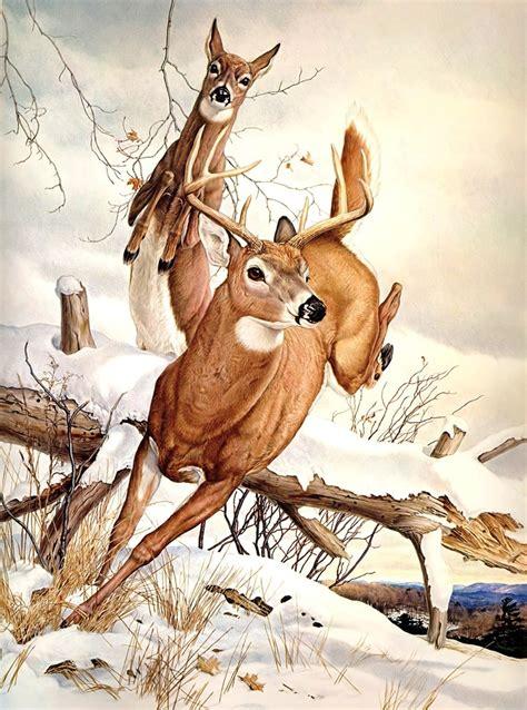 buck doe glen loates deer pinterest