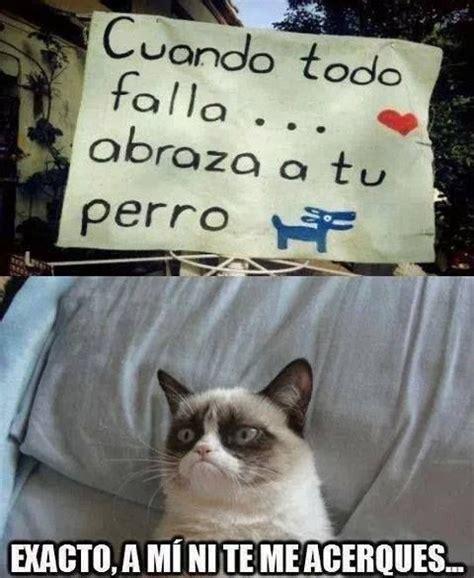 Memes De Gatos - resultado de imagen para perros vs gatos memes espa 241 ol funny pinterest memes humor and