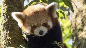 Kleine Fliegen In Der Erde : der kleine panda erlebnis erde ard das erste ~ Frokenaadalensverden.com Haus und Dekorationen