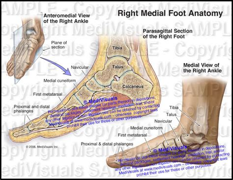 The Foot And Ankle Online Journal