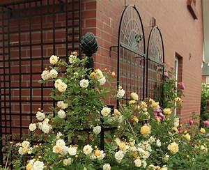 Rankhilfe Rosen Freistehend : rosen rankhilfe aus metall fabulous rosen rankhilfe aus metall with rosen rankhilfe aus metall ~ Orissabook.com Haus und Dekorationen