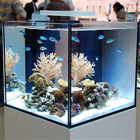 1000 ideas about nano aquarium on aquascaping aquarium and betta
