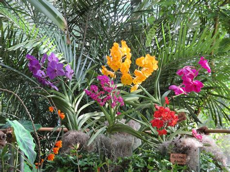 Botanischer Garten Berlin Orchideenschau by Orchideenschau Im Botanischen Garten Kiel Reiselurch De