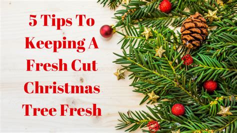 5 tips to keeping a fresh cut christmas tree fresh enter