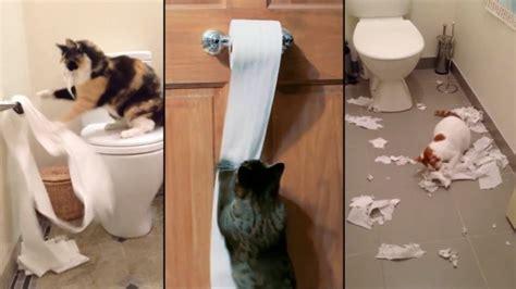 papier toilette qui se dissout dans l eau chat vid 233 os de chats part 2
