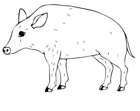 ausmalbilder wildschweine zum ausdrucken kostenlos fuer
