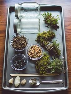 Winterschutz Für Pflanzen Selber Bauen : wie baue ich ein terrarium pflanzen und passende glasgef e ~ Whattoseeinmadrid.com Haus und Dekorationen
