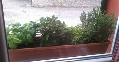 piante da davanzale veganchef88 le piante aromatiche