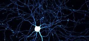 The Surprising Metabolism Of  U0026quot Exercising U0026quot  Neurons
