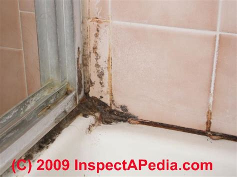 bathroom mold cleanup clean  tile grout joints remove