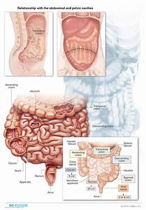Gastroenterology - Medical Illustration