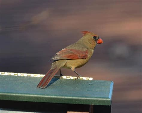 Backyard Bird Feeding Tips