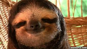 Relaxed Sloth GIF - Find & Share on GIPHY