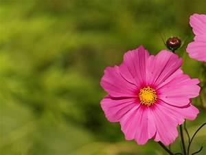 Garten Blumen Bilder : kostenloses foto hintergrund blume blumen garten kostenloses bild auf pixabay 316702 ~ Whattoseeinmadrid.com Haus und Dekorationen