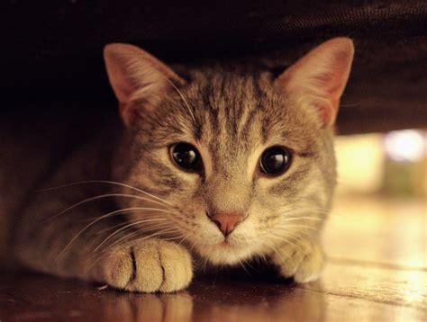 Katze Blasenentzündung Durch Stress