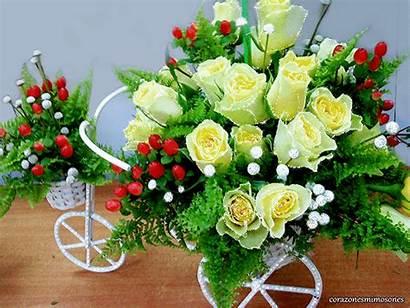 Flores Gifs Encontradas Hermosas Rosas Hermosos