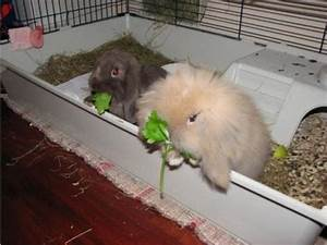 Kaninchenkäfig Für 2 Kaninchen : suche neues zuhause f r 2 kaninchen 218834 ~ Frokenaadalensverden.com Haus und Dekorationen