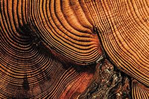 Music Of The Tree Rings  Sound Of A Wild Forest