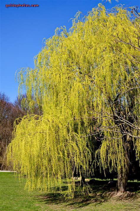 Forstbotanischer Garten Köln by Fr 252 Hlingsbl 252 Ten Im Forstbotanischen Garten K 246 Ln