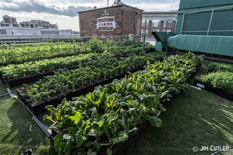 rooftop vegetable gardens fenway park s rooftop vegetable garden