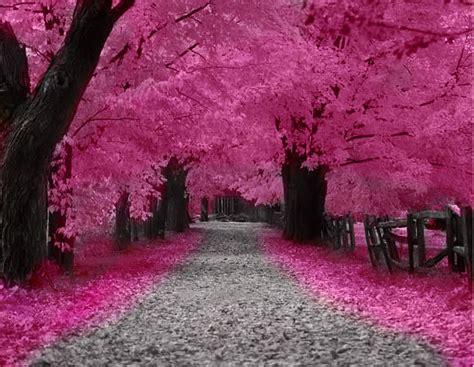 japanese trees with pink flowers wish list wednesday 03 28 2012 the bibliotaphe closet