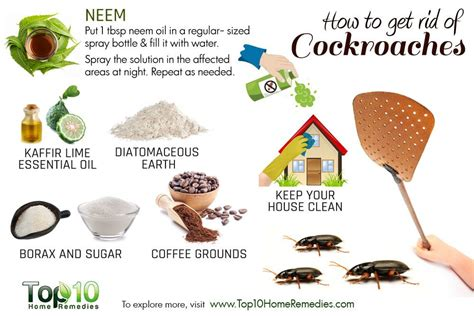 rid  cockroaches top  home remedies
