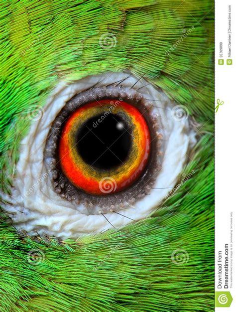 amazon parrot stock photo image  color domestic