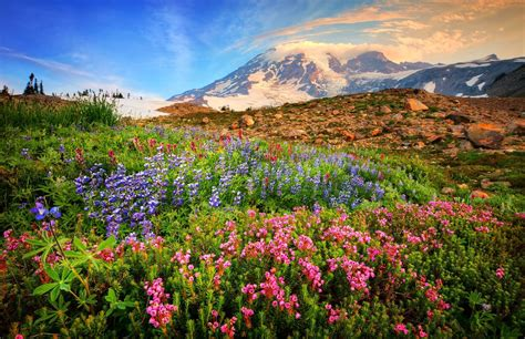 mountain wildflowers hd wallpaper background image