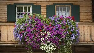 Sommerblumen Für Schatten : blumen f r balkonk sten sonnig nxsone45 ~ Michelbontemps.com Haus und Dekorationen