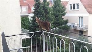 Katzen Balkon Sichern Ohne Netz : balkon sichtschutz alu atemberaubend blumenkasten balkon balkon beleuchtung ~ Frokenaadalensverden.com Haus und Dekorationen