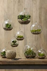 Sukkulenten Im Glas Pflanzen : sukkulenten im glas im blickfang kreative deko ideen mit pflanzen diy blumen und pflanzen ~ Eleganceandgraceweddings.com Haus und Dekorationen
