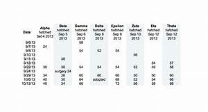 Baby Fruit Growth Chart Cyclura Data Weight Measurements Of Rock Iguana Babies
